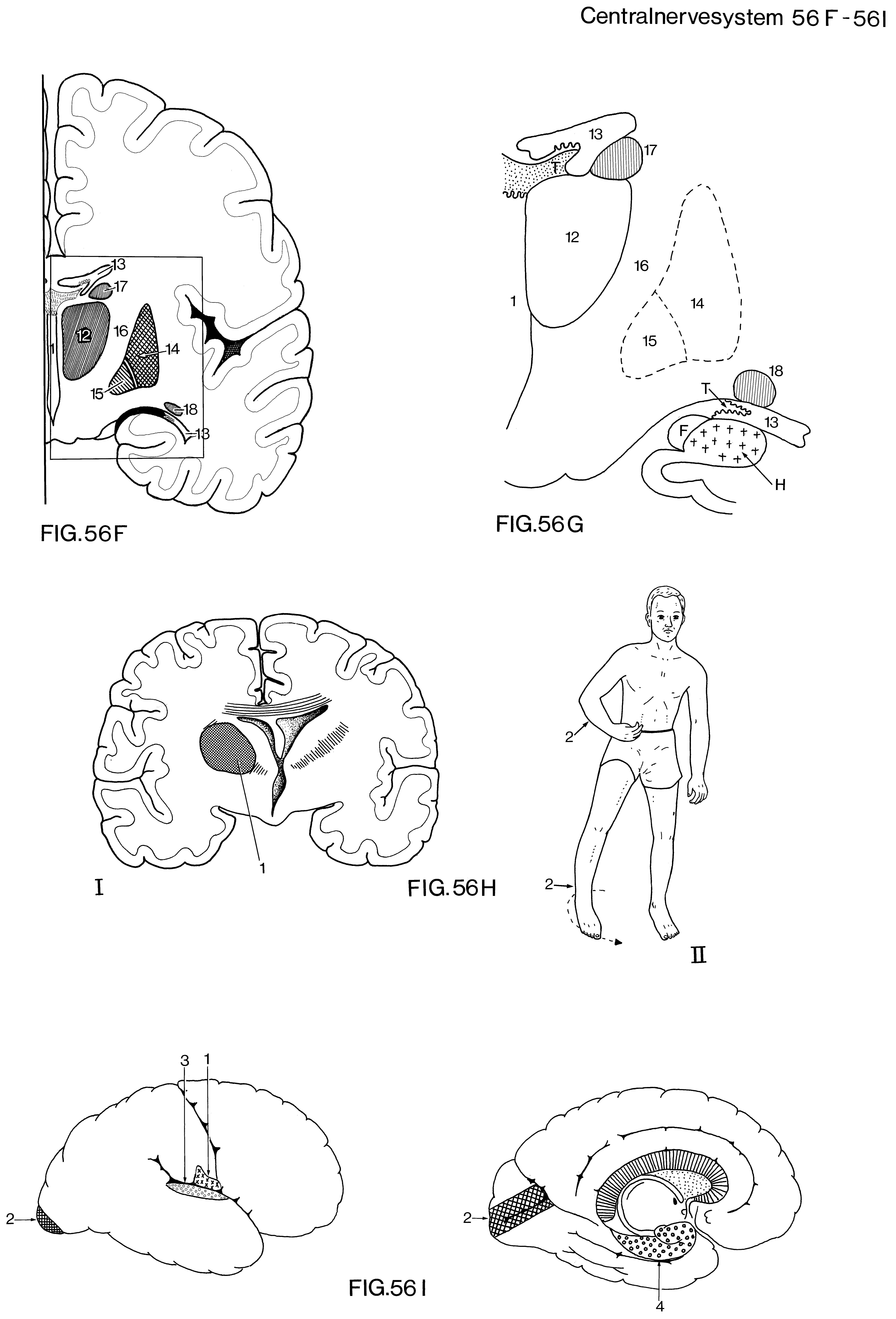 hvilket sanseorgan er størst i kroppen